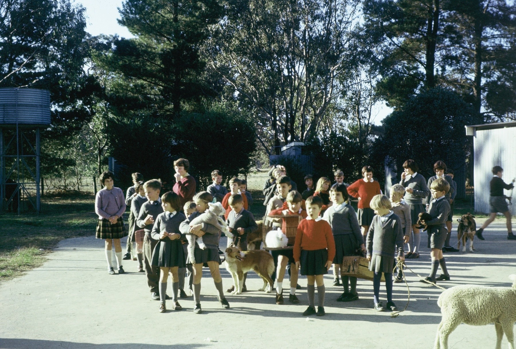 Hynam School Pet Show, circa 1968